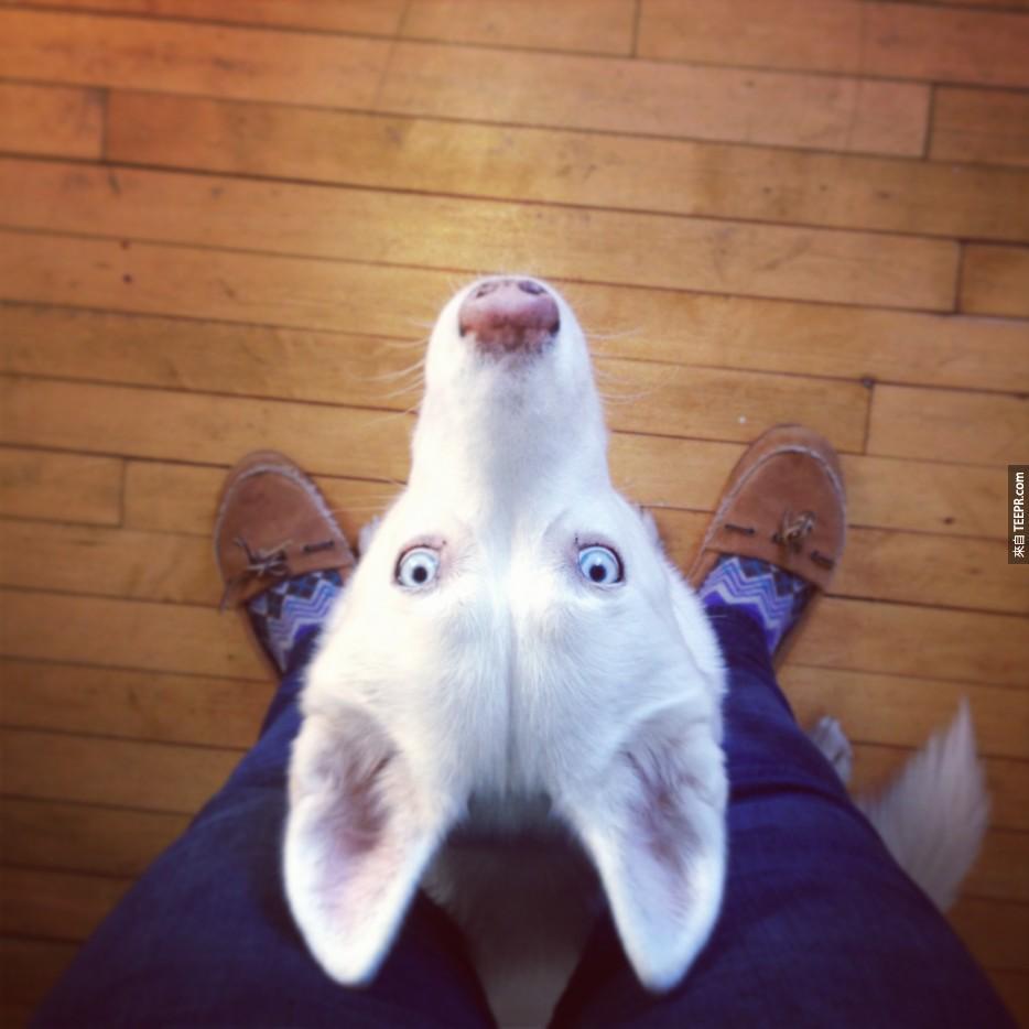 這33隻哈士奇狗狗已經「哈士奇」到不行了。今天就讓他們溫暖你的心吧!