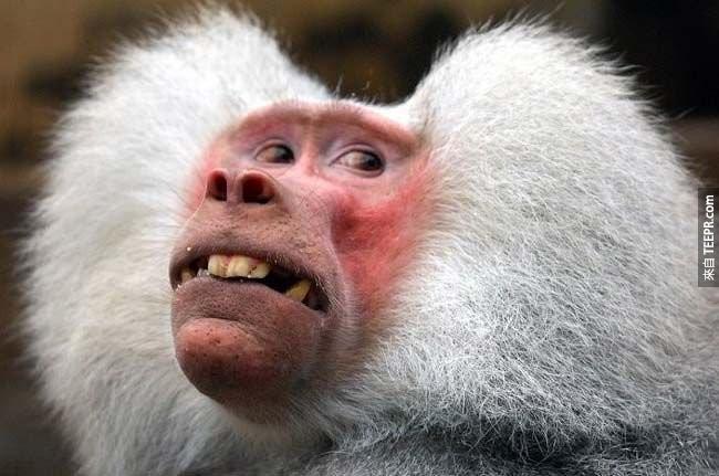 超好笑的猴子