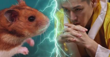 看看這隻黃金鼠跟「熱狗大賽冠軍」小林尊比賽吃熱狗。誰會贏呢?