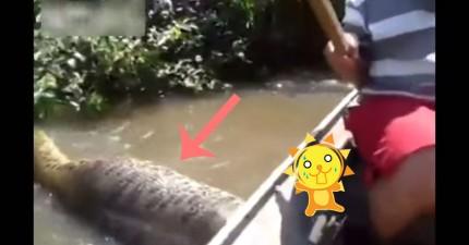 他們在船上驚遇世界上最大的巨蟒。等一下...那個人怎麼開始徒手去抓牠?!