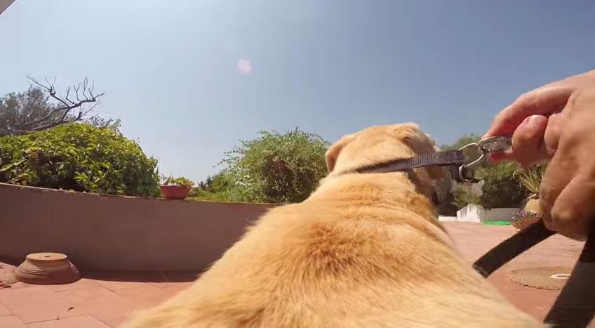 從一隻快樂的狗狗的眼裡,他就是他最快樂的一天。