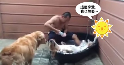 這是全世界最愛洗澡的狗。快看看他的表情!