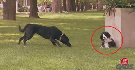 你看過很多給人類的惡作劇,但你一定沒有看過這種給狗狗的。