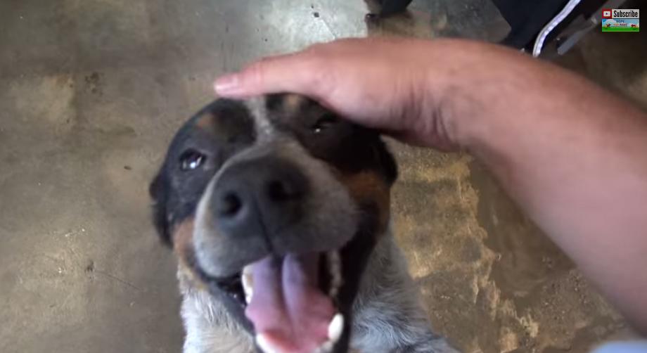 這隻狗狗在垃圾箱底下躲了11個月。脆弱的他被救出來後的反差太讓人感動了!