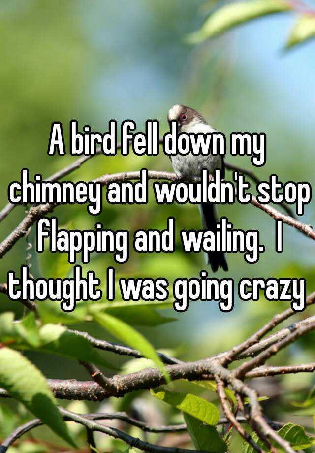 5. 有一隻鳥從我的煙囪掉下來,不斷地拍打翅膀跟哀嚎。我都快要發瘋了!