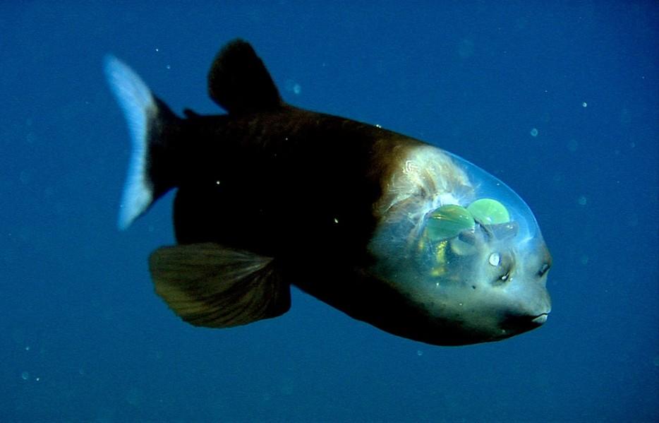 26種最詭祕的海底動物,讓科幻片看起來像是小兒科!