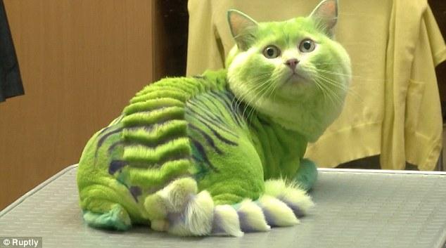 就因為「原本的樣子很無聊」,這些人把他們的寵物都改造成這副駭人的模樣。
