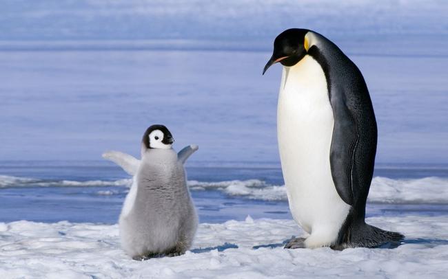 這些小動物可愛到讓人想要永遠抱著他們不放。你怎麼知道極度可愛是我的弱點?!
