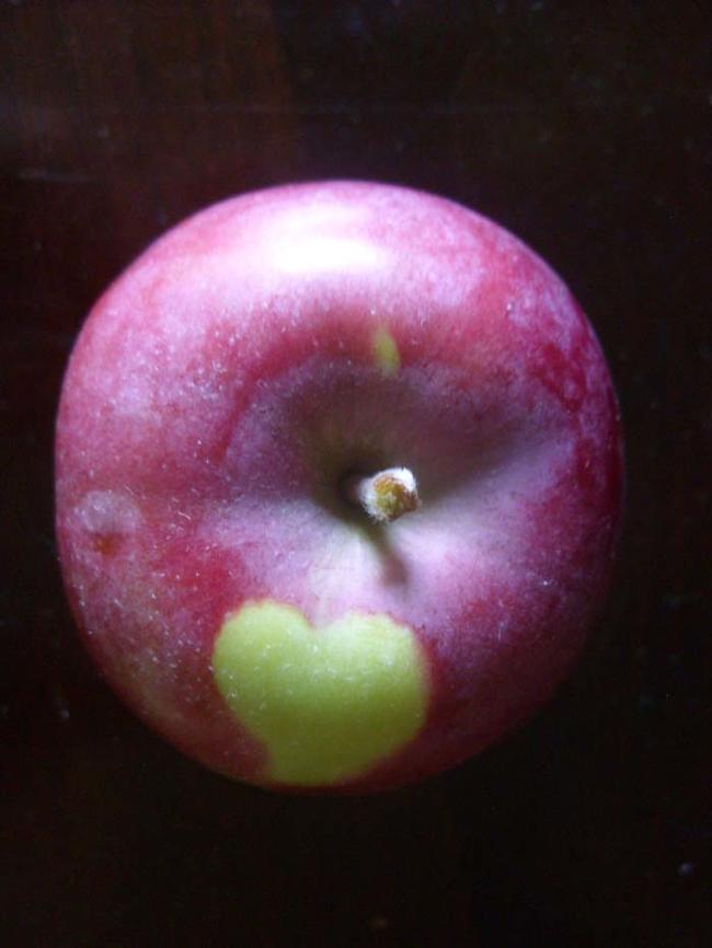 2. 蘋果