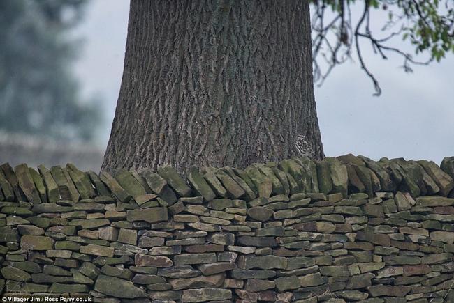 你以為只有樹木和石頭嗎?