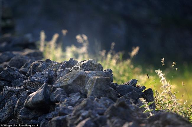 大自然想要挑戰你的眼力,看你能不能找到照片中「隱形」的貓頭鷹。