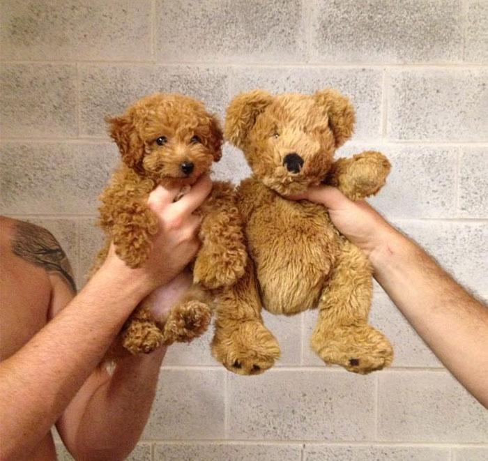 1. 小狗和泰迪熊