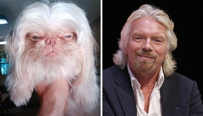 3. 長得像李察·布蘭遜(Richard Branson)的狗