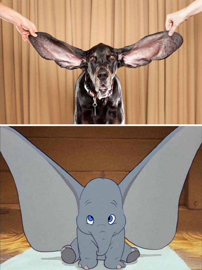 Dog With Huge Ears Looks Like Dumbo