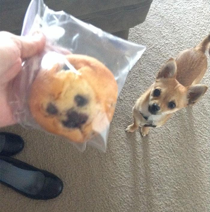 Dog Looks Like A Muffin