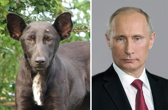 4. 長得像俄羅斯總統普丁(Putin)的狗