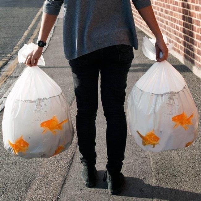 把髒髒無聊的垃圾袋,改造成一袋袋金魚,讓倒垃圾的時候增添不少樂趣。