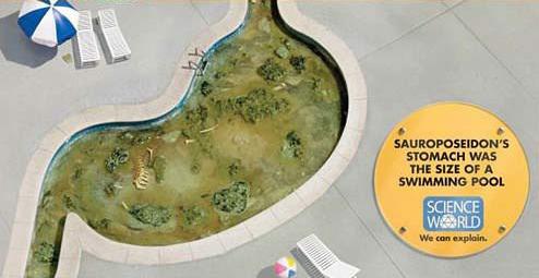 蜥海神龍(Sauroposeidon)的胃就跟這個游泳池一樣大。