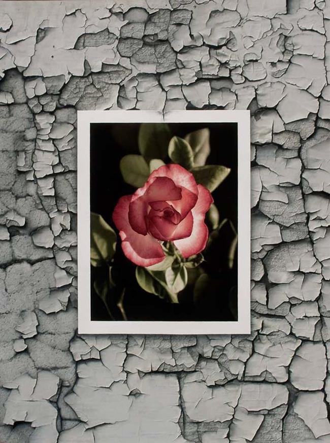 """Single Rose."""