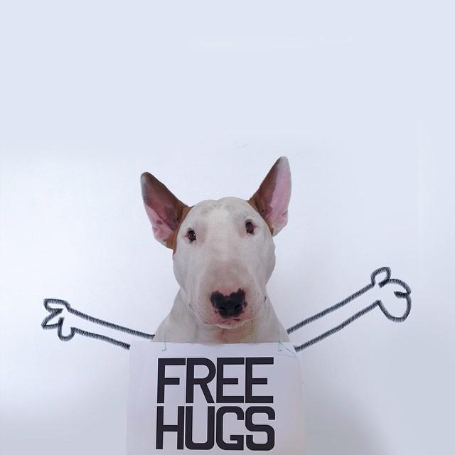 離婚後,這名狗主人把悲憤化成這個讓網路為之瘋狂的「賤狗攝影集」。