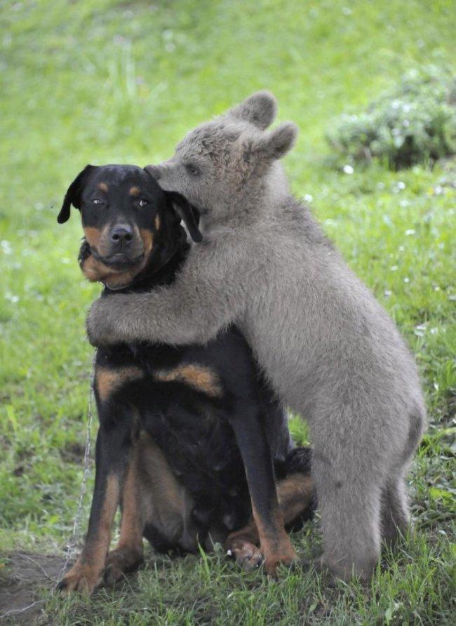 這30隻小動物自以為很兇,他們都不知道自己逞兇鬥狠的樣子已經可愛破表了!
