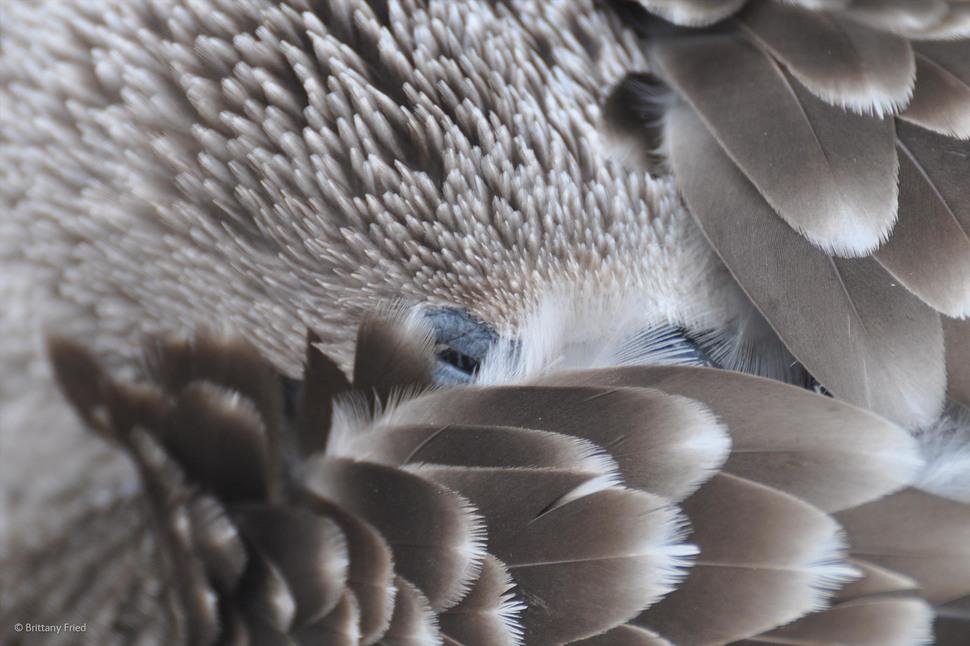 2014年野外攝影大獎的43張得獎作品,讓你讚嘆大自然的極致之美。
