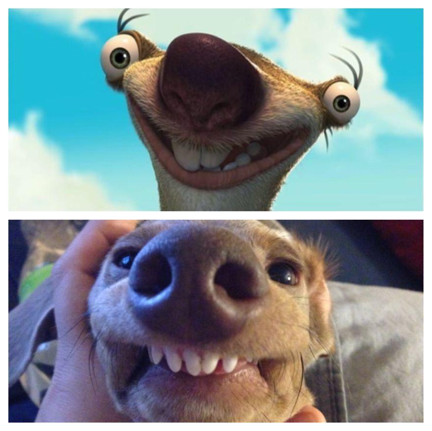 Weenie Dog Looks Like Sid!