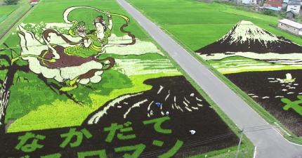 這些不是電腦裡做出來的圖案。我沒有想到稻米居然還有這麼棒的用途!