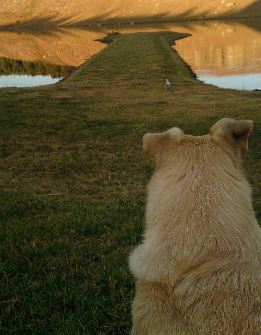 31. 狗狗與跟他背影很像的岬。