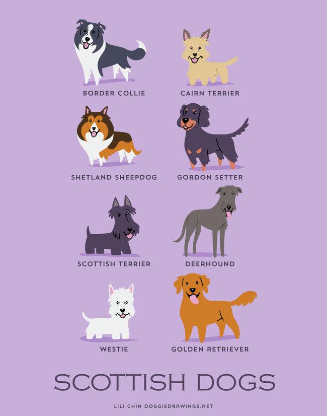 這名畫家把「世界犬種指南」變成漫畫風格。可以不要這麼可愛好嗎?