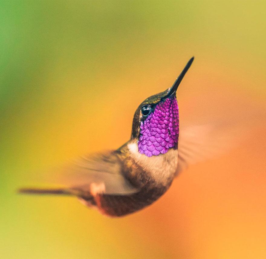 20 張最難以捕捉的蜂鳥照片,會讓你不敢相信自己的眼睛!