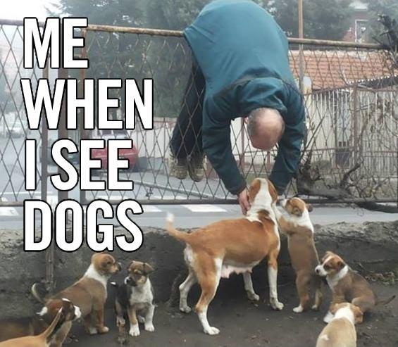 18. 你在路上看到狗狗的反應就跟看到名人一樣。