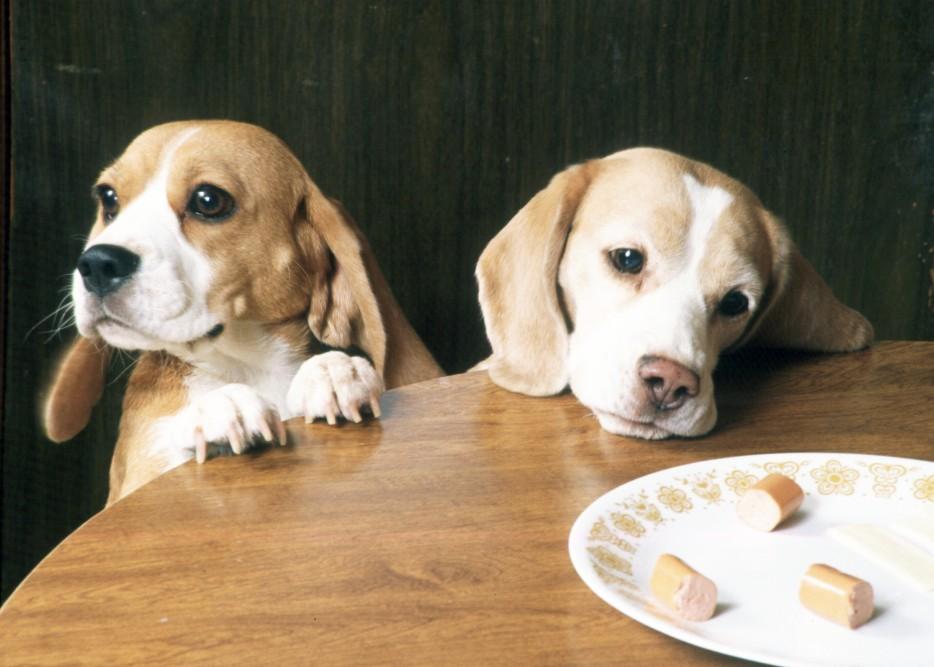 20. 當你到別人家,發現矮桌上有放著食物,你都會替他們擔心一下。