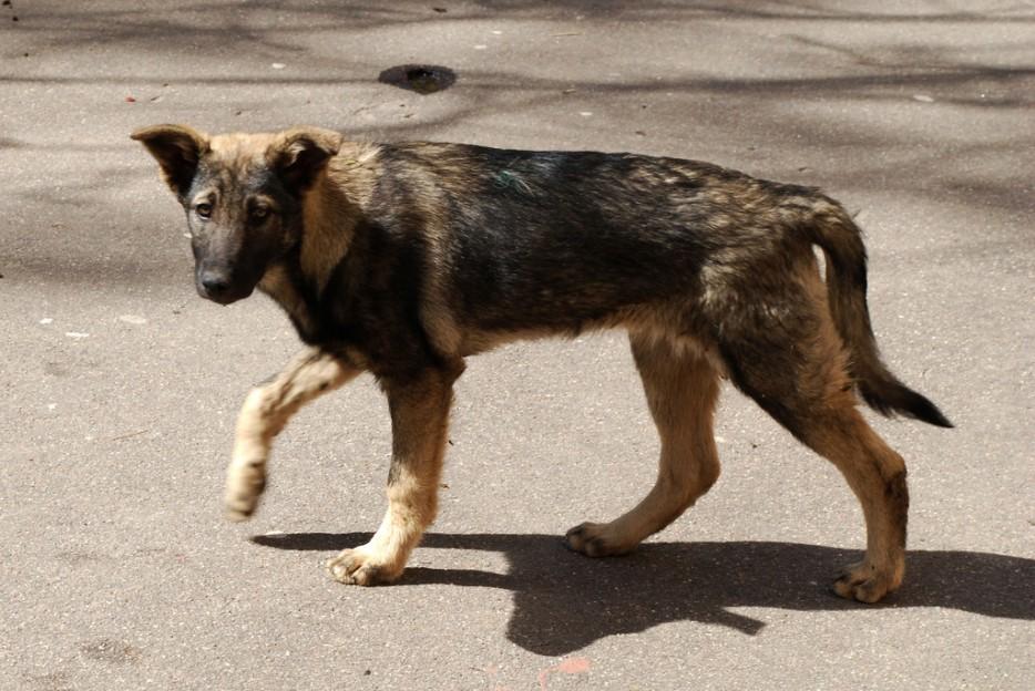 21. 當你在路上發現一些走丟或是流浪的狗狗,你會主動去幫他們。