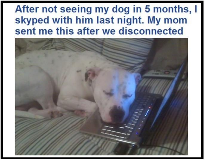 27. 當你出門遠行的時候,狗狗會比家人們更讓你思念。
