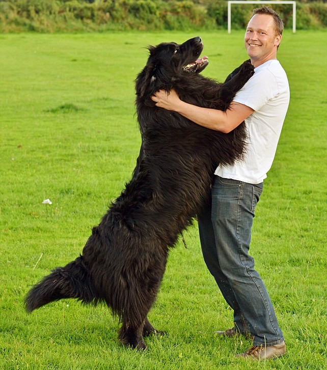 28. 你爸媽會說:「你覺得你都比較愛狗狗欸...」
