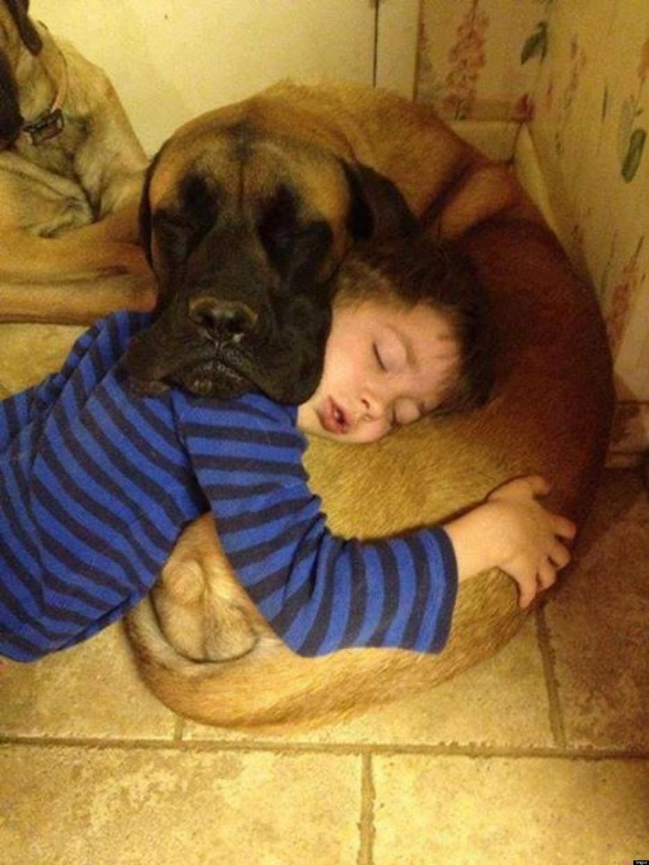 29. 你把你的狗狗視為最好的朋友、心理治療師、知己。