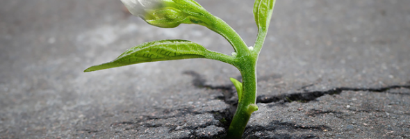 驚人生命力的植物
