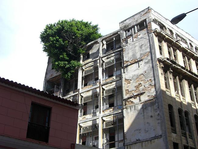 人類的建築怎麼樣都打不過這些植物。這讓我們看到絕對不能小看大自然!