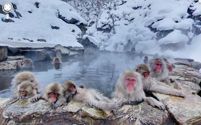 25. 在日本雪地泡溫泉的猴子們。
