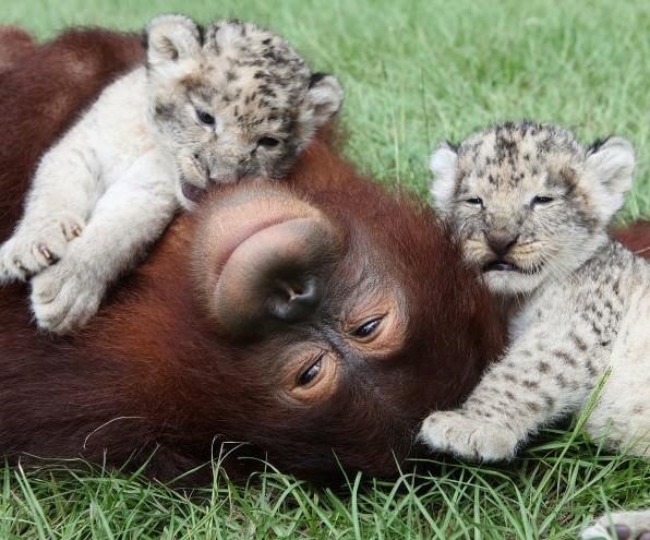這些動物之間的感人故事,證明動物的情感有時比人類還要深。
