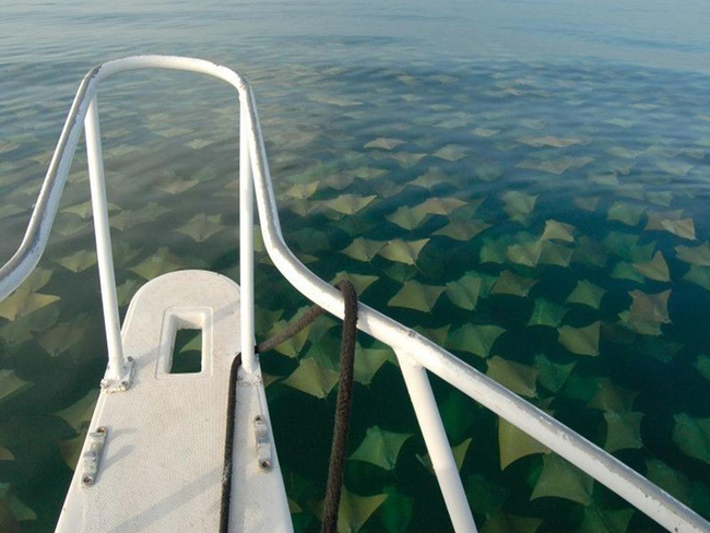 想像一下,當你往船下看,你會看到這樣的景象,一路綿延到地平線的另一端。