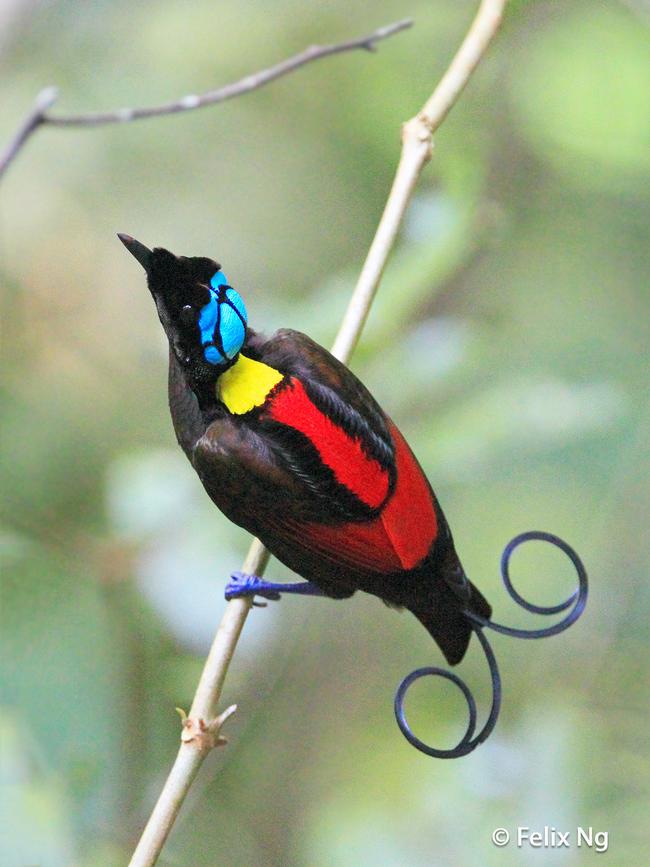 20隻最難拍攝到的稀有鳥類,值得你靜下心來慢慢欣賞。