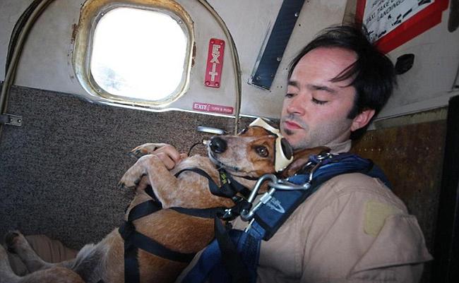 你可能覺得狗狗都很膽小,但這隻臘腸狗卻挑戰了多數人都不敢做的事情!