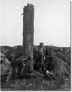 17. 在一次世界大戰的時候,德國人建了一顆7.6公尺的鐵樹,來監視同盟國(Allies)。為了完成這項任務,他們在晚上有戰火圍繞的時候,把一棵樹砍掉,這樣同盟國軍才不會聽到劈砍的聲音。