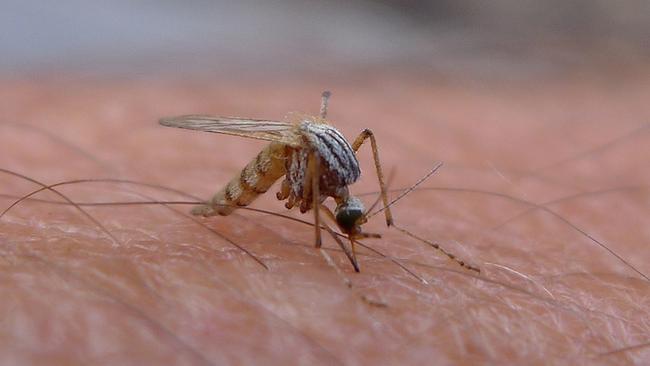 12. 日本的科學家,以研究蚊子來做出無痛的針頭。(這簡直是全人類的救星!)