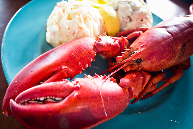 14.) Many scientists believe lobsters do not die of natural causes. Basically, they're immortal.