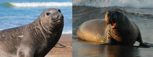 10.) Elephant Seals, too.