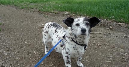 15隻混種狗會改變你只覺得純種狗好的刻板思想。
