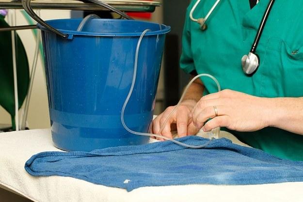 這隻寵物金魚長了腫瘤,開啟了這個史上最驚奇的切除手術。